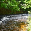 20 ACRES ON NORTH BRANCH SARANAC RIVER