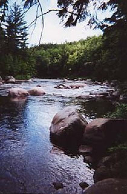 The West Branch of the AuSable River in the backyard
