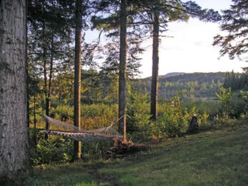 Backyard hammock overlooking the stream and pond