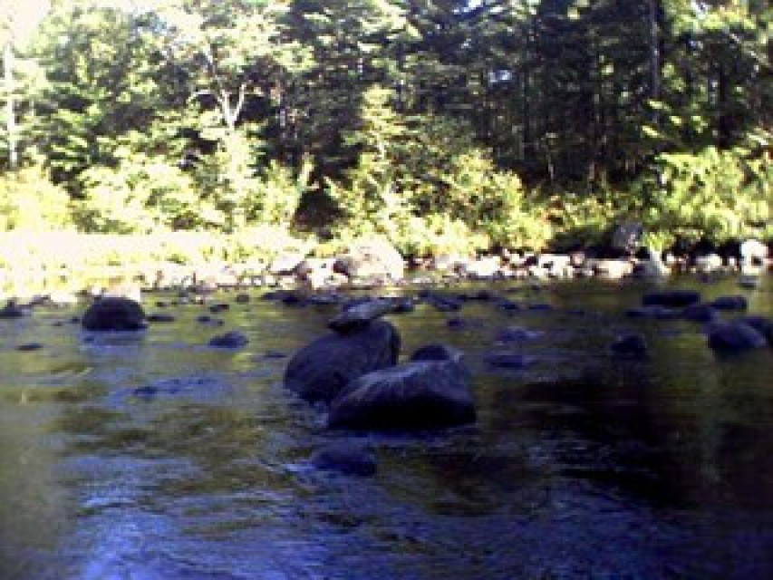 Looking downstream where the trout wait