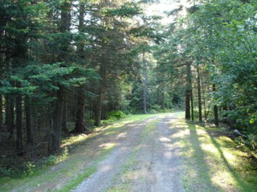 Long driveway on the wooded two acre lot