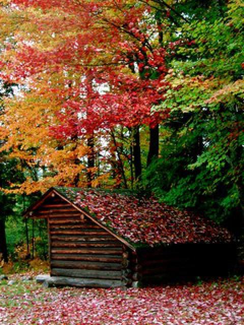 Adirondack lean-to, Garby Camp, Fall