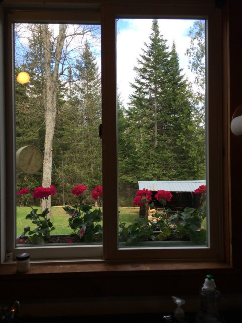 view from kitchen window to Adirondack lean-to