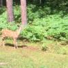 Frequent Wildlife
