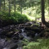 Brook along the trails in property's 23 acres