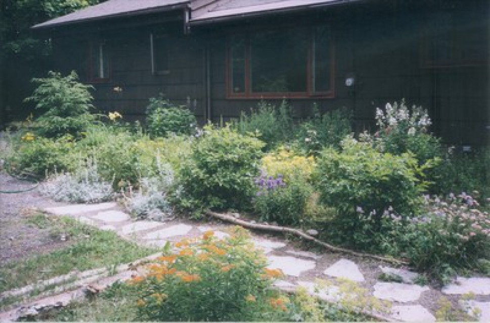 Wildflower garden at front of house